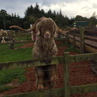 Dalscone Farm Fun, Dumfries