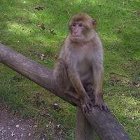 Trentham Monkey Forest, Stoke-on-Trent